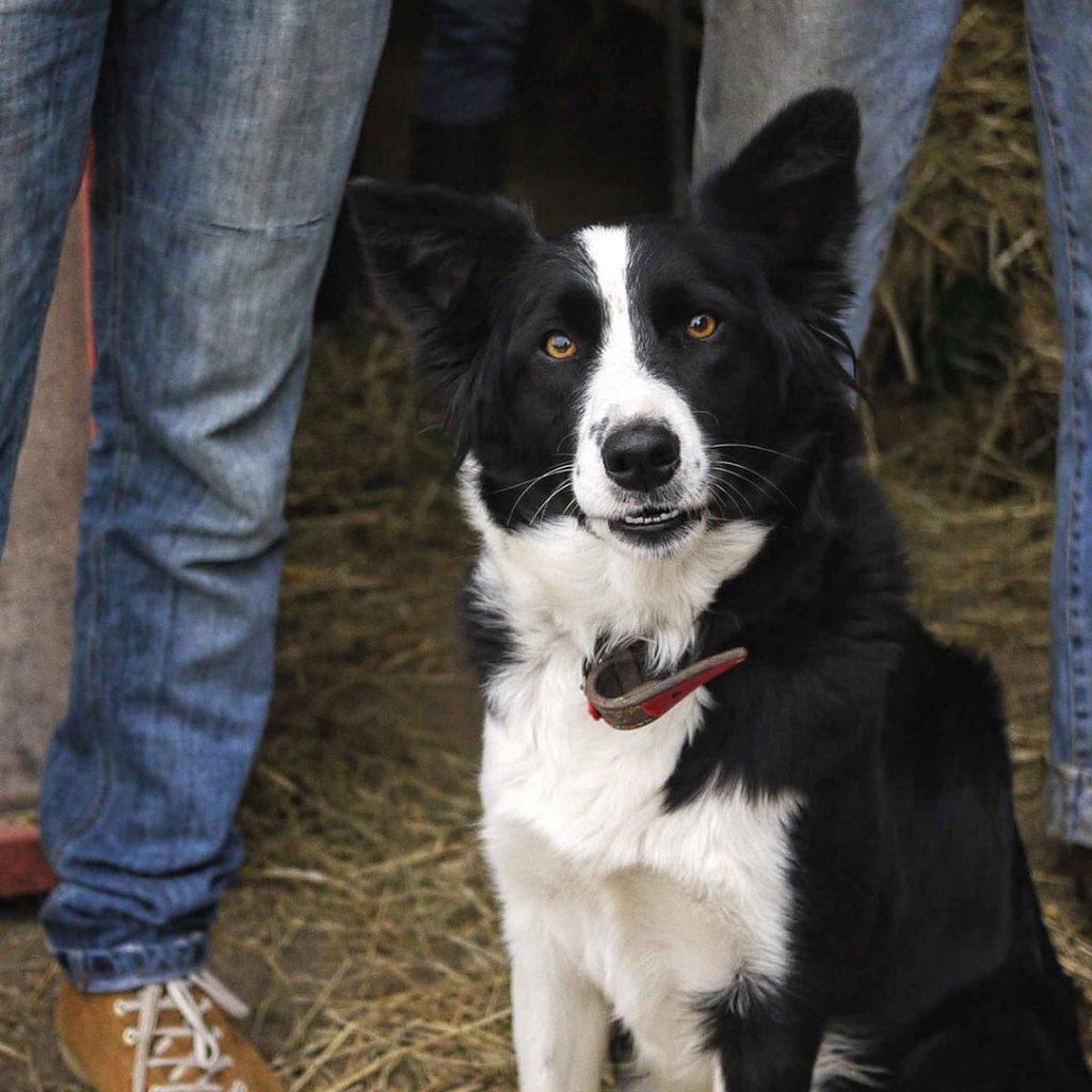 un chien à la ferme